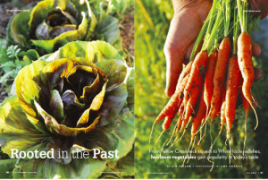 carrotsngreens.jpg