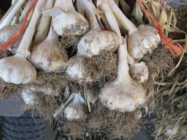 i-clove-garlic.jpg