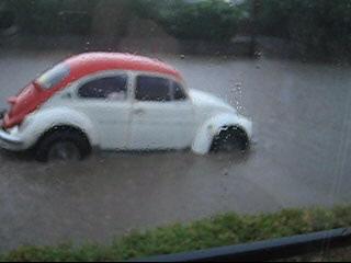 wet-bug.jpg