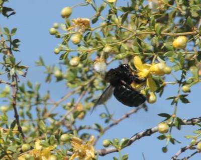 bee-again.jpg
