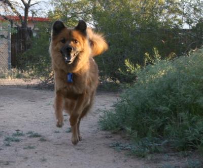 bouncing-dog.jpg