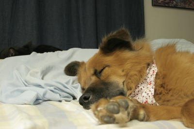 sleepy-pets.jpg