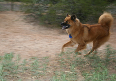 run cinnamon bear!!!