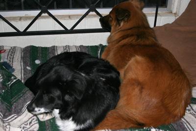 cuddlekids
