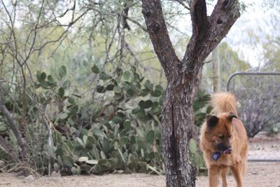 dog-tree