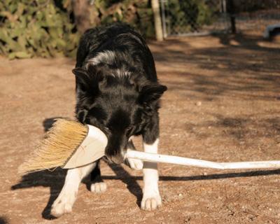 dogwbroom