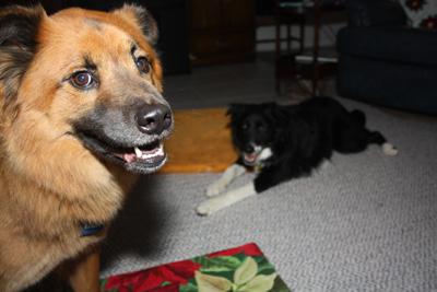 xmas-dogs