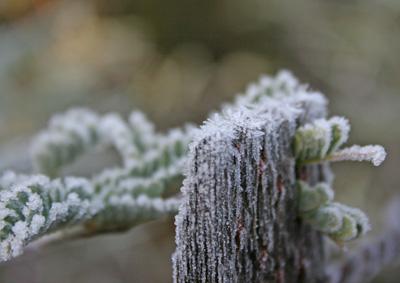 xmas-frost