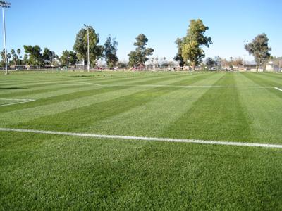 soccer31