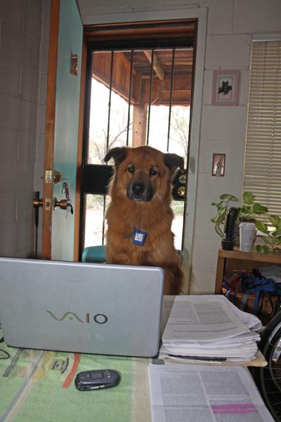 assistantbeedog