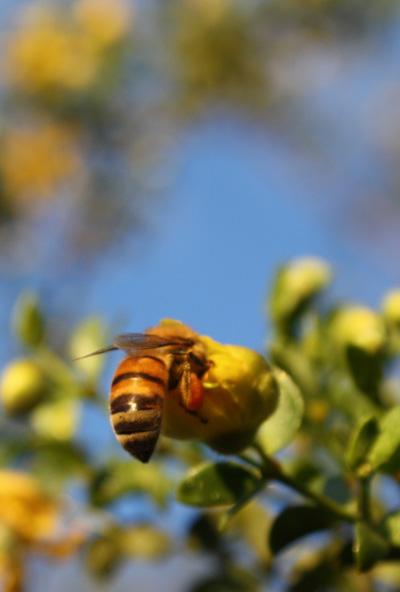 sunbee2