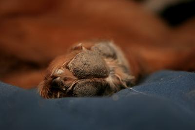 sleepypaw1